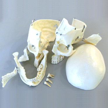 DM01 modello cranio 2 - Gestor Cosmetics