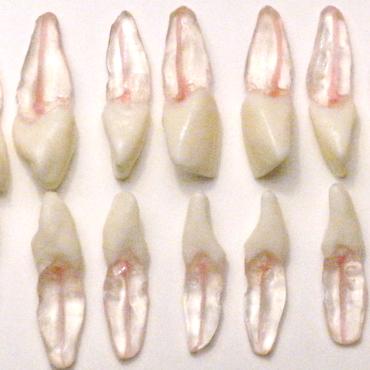 зъби за ендодонтска практика